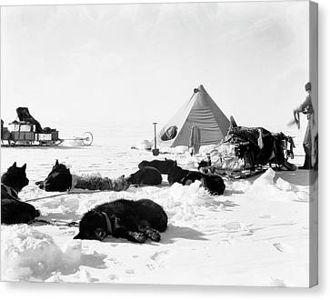 Antarctic Sled Dogs Canvas Print