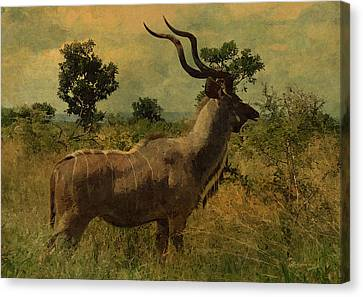 Antelope Canvas Print by EricaMaxine  Price