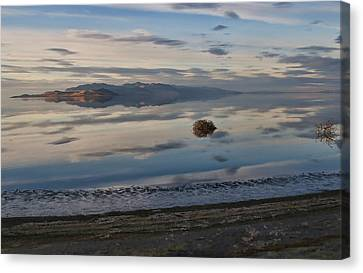 Canvas Print featuring the photograph Antelope Island - Lone Tumble Weed by Ely Arsha