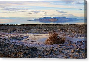 Canvas Print featuring the photograph Antelope Island - Tumble Weed by Ely Arsha