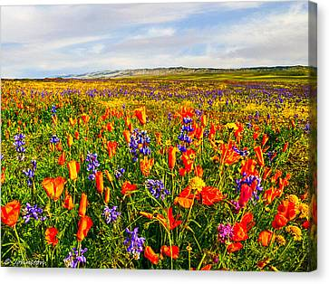 Antelope Valley California Poppy Reserve Canvas Print by Bob and Nadine Johnston