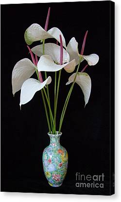 Anthurium Bouquet Canvas Print by Mary Deal