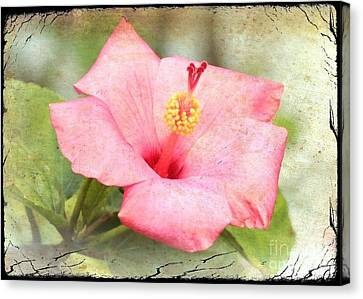 Digital Touch Canvas Print - Antique Hibiscus by Carol Groenen