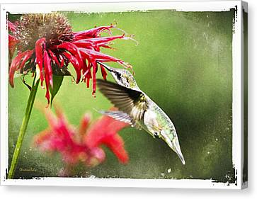 Antique Hummingbird Postcard No. 1124 Canvas Print by Christina Rollo