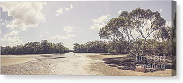 Beautiful Creek Canvas Print - Antique Mangrove Landscape by Jorgo Photography - Wall Art Gallery