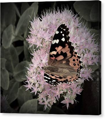 Canvas Print featuring the photograph Antique Monarch by Photographic Arts And Design Studio