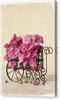 Antique Rose Cart Canvas Print by Edward Fielding