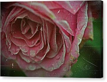 Antique Rose In Fog Canvas Print by Jp Grace