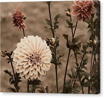 Canvas Print featuring the photograph Antiqued Dahlias by Jeanette C Landstrom