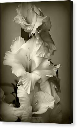 Antiqued Gladiolus Canvas Print