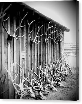 Antlers Canvas Print by Dan Sproul