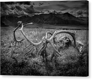 Antlers In Black And White Canvas Print by Andrew Matwijec