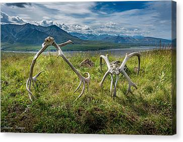 Antlers On The Hill Canvas Print by Andrew Matwijec