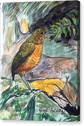Antpitta Canvas Print by Asuncion Purnell