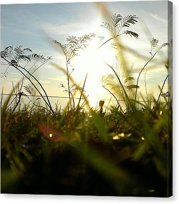 Canvas Print featuring the photograph Ant's Eye View by Thomasina Durkay
