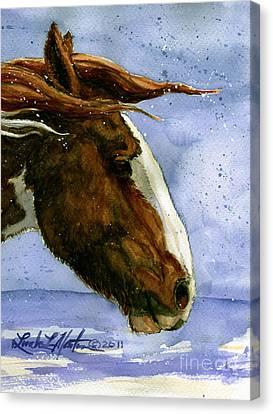 Apache Bachelor Stallion Of Sand Wash Basin Canvas Print