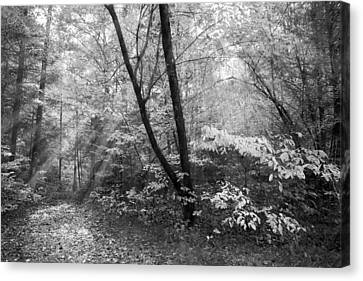 Dogwood Lake Canvas Print - Appalachian Mountain Trail In Black And White by Debra and Dave Vanderlaan
