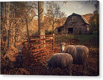 Appalachian Sheep Canvas Print by William Schmid