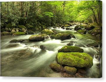 Appalachian Spring Stream Canvas Print