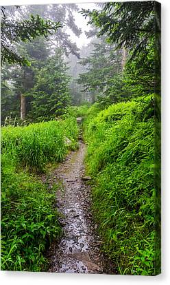 Appalachian Trail At Clingmans Dome Canvas Print by Anthony Heflin