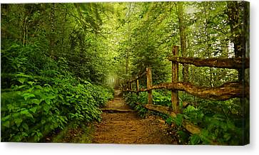 Appalachian Trail At Newfound Gap Canvas Print