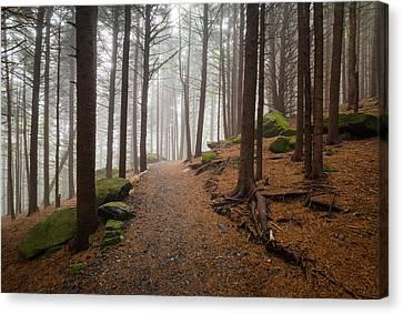 Appalachian Trail Landscape Photography In Western North Carolina Canvas Print by Dave Allen