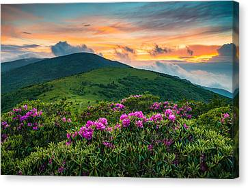 North Carolina Appalachian Trail Roan Mountain Highlands Canvas Print by Dave Allen