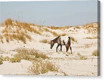 Appaloosa Beach Canvas Print by Barbara Northrup
