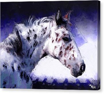 Appaloosa Pony Canvas Print by Roger D Hale