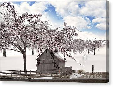 Apparition Canvas Print by Liane Wright