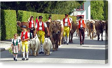 Appenzell Parade Of Cows Canvas Print