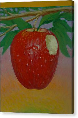 Apple 3 In A Series Of 3 Canvas Print by Don Young