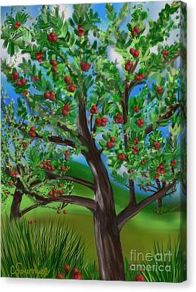 Apple Acres Canvas Print by Christine Fournier