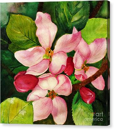 Apple Blossom Canvas Print by Anjali Vaidya