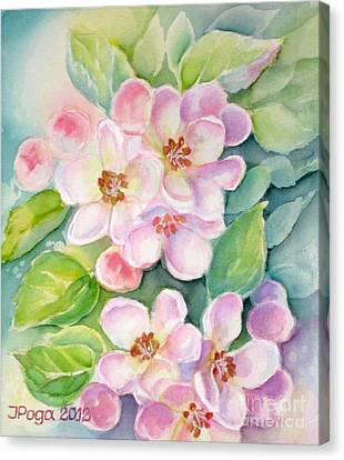 Apple Blossoms 1 Canvas Print