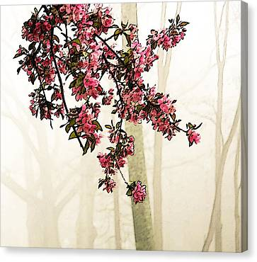 Apple Blossoms In Fog Canvas Print by Brooke T Ryan
