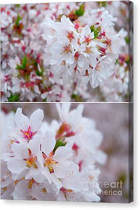Flowers Canvas Print - Apple Blossoms In Spring by Sabine Jacobs
