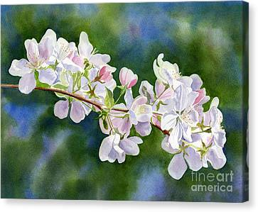 Apple Blossoms With Blue Green Background Canvas Print by Sharon Freeman
