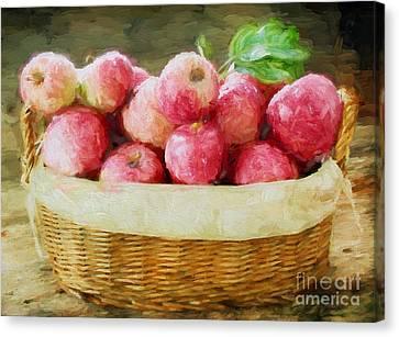 Apple Harvest Canvas Print by Darren Fisher