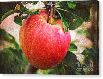 Apple On The Tree Canvas Print by Andee Design