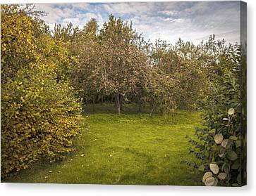 Apple Orchard Canvas Print by Amanda Elwell
