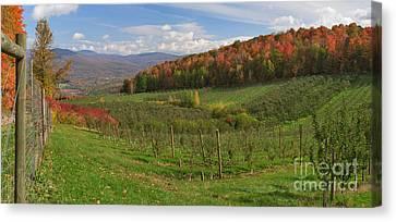 Apple Orchard Panorama Canvas Print