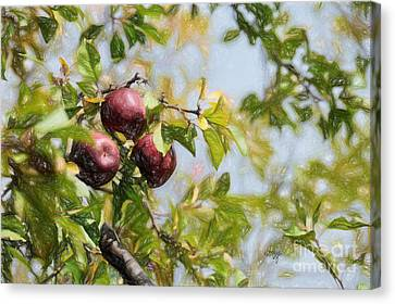 Apple Pickin' Time Canvas Print by Lois Bryan