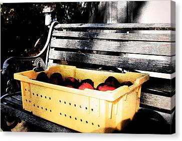Canvas Print featuring the photograph Apple Picking by Meaghan Troup