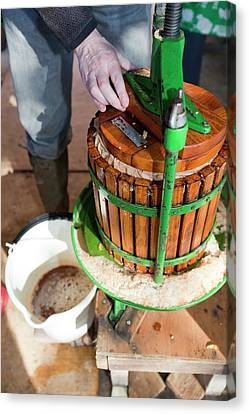 Apple Press In Use Canvas Print by Ashley Cooper