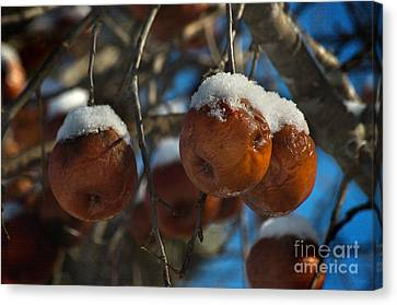 Apple Sorbet Canvas Print by The Stone Age