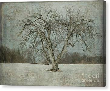 Canvas Print featuring the photograph Apple Tree In Winter by Vicki DeVico