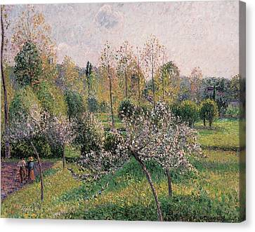 Apple Trees In Blossom Canvas Print