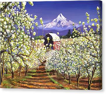 Appleblossoms Mount Hood Canvas Print
