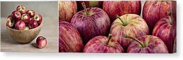 Apples 01 Canvas Print by Nailia Schwarz